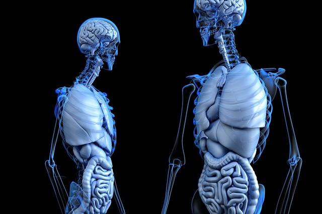 anatomické tělo