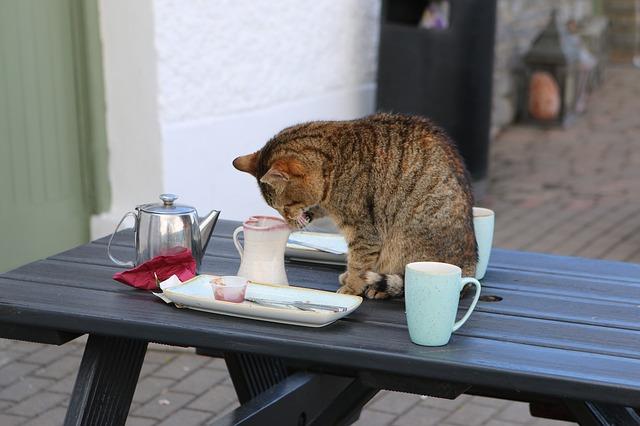 kočka u kávy