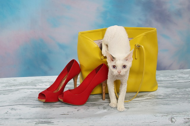 kočka v kabelce