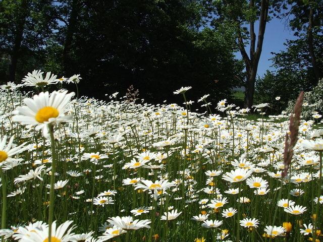 mýtina posetá květinami uprostřed lesa