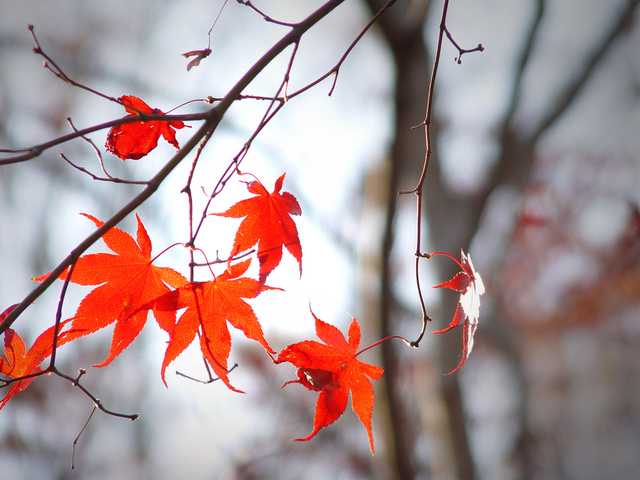 podzimní atmosféra padajícího červeného listí a chmuru